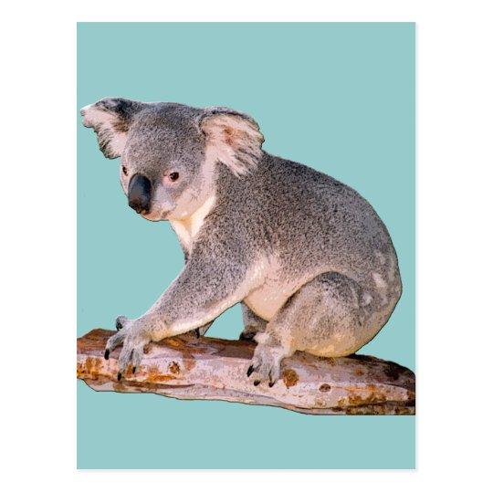 Koala Picture Postcard