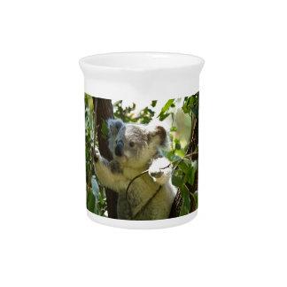 koala pitcher