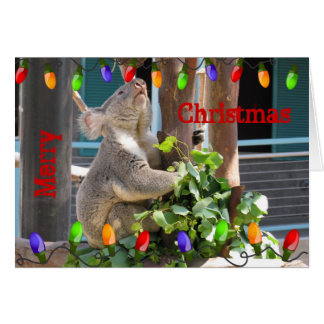 Koala Preparing for Christmas Card