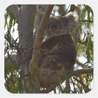 KOALA SITTING IN TREE IN THE WILD RURAL AUSTRALIA SQUARE STICKER