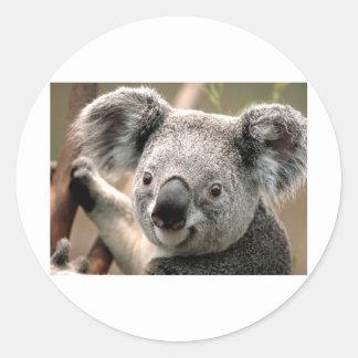 Koala Stickers