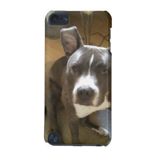 koa's ears iPod touch (5th generation) covers