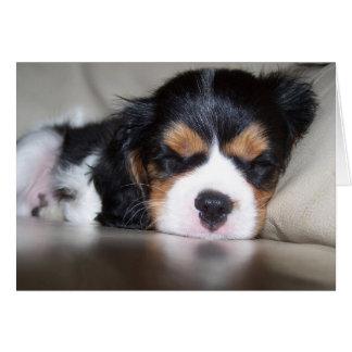 Koda Cavalier Spaniel Pup Card