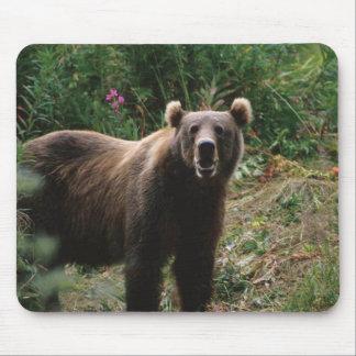 Kodiak Brown Bear Mouse Pad