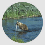 Kodiak brown bear stickers