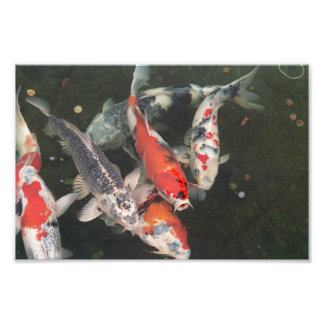Koi Art Photo