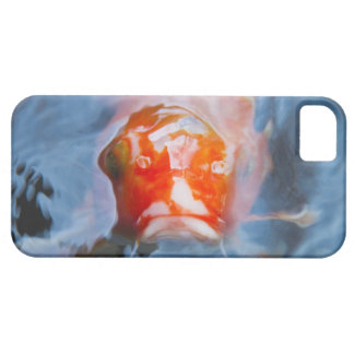 Koi Carp (Cyprinus carpio), Japan iPhone 5 Cover