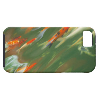 Koi carp fish swimming in a pond iPhone 5 case