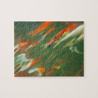 Koi carp fish swimming in a pond jigsaw puzzle