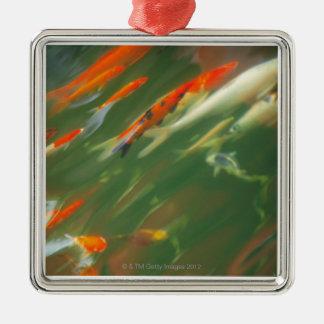 Koi carp fish swimming in a pond Silver-Colored square decoration