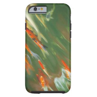 Koi carp fish swimming in a pond tough iPhone 6 case