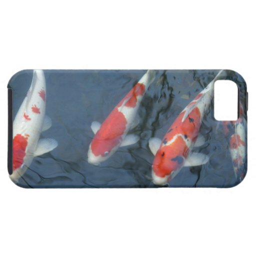 Koi carp in pond, high angle view iPhone 5 cases