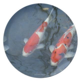 Koi carp in pond, high angle view plate