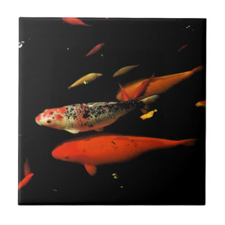 Koi carp tiles small koi carp ceramic tiles for Small koi carp