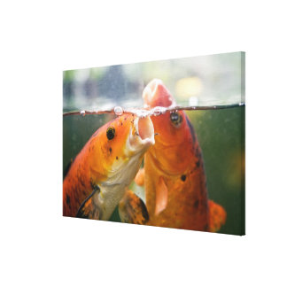 Koi carps canvas print