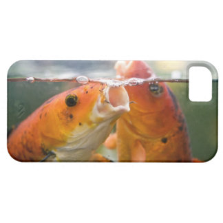 Koi carps iPhone 5 cases