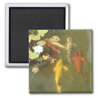 Koi Fish in a Lily Pond Magnet
