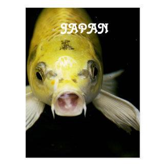 Koi Fish in Japan Postcard