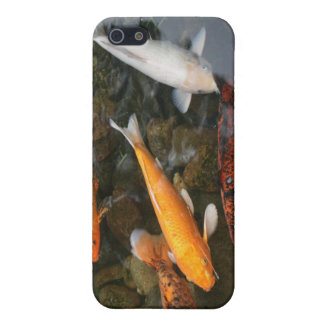Koi Fish In Pond Photograph Case For iPhone 5/5S