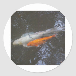 KOI Fish in the pond Stickers