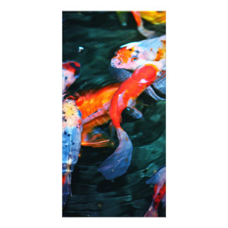Koi Fish Photo Card