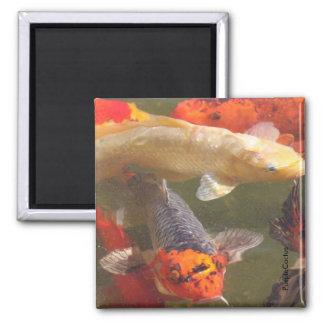 Koi Fish v.2 Magnet