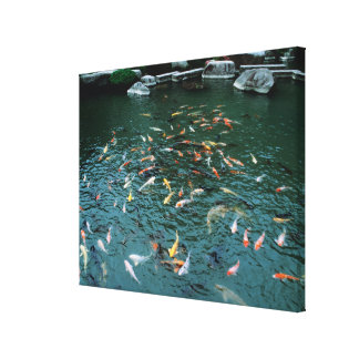 Koi in a Pond Canvas Print
