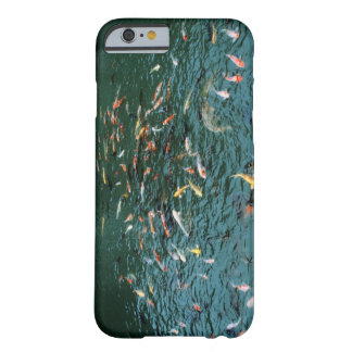 Koi in a Pond iPhone 6 Case