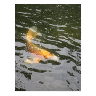 Koi, Japanese Gardens, Rockford IL Postcard