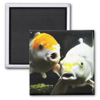 Koi Photography Magnet