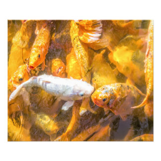 Koi Pond Photo Print