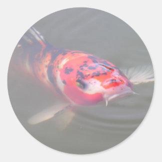 Koi Pond Round Sticker