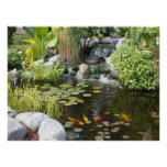 Koi Pond with Waterfall Poster