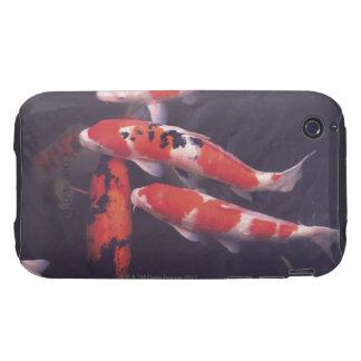 Koi swimming in pool iPhone 3 tough case