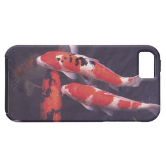 Koi swimming in pool iPhone 5 covers