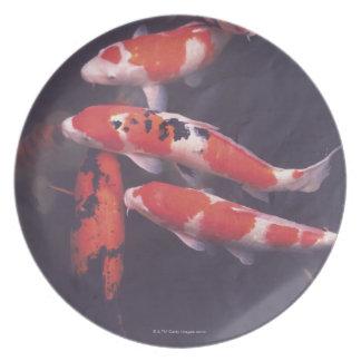 Koi swimming in pool plate