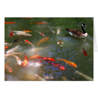 Koi with Canada Geese Card