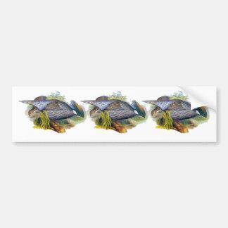 Koklass Pheasant Bumper Stickers