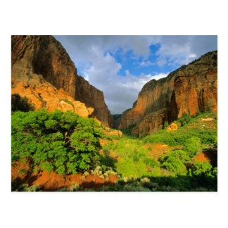 Kolob Canyon at Zion Canyon in Zion National Postcard