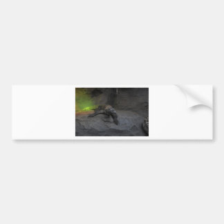 Komodo Dragon Bumper Sticker