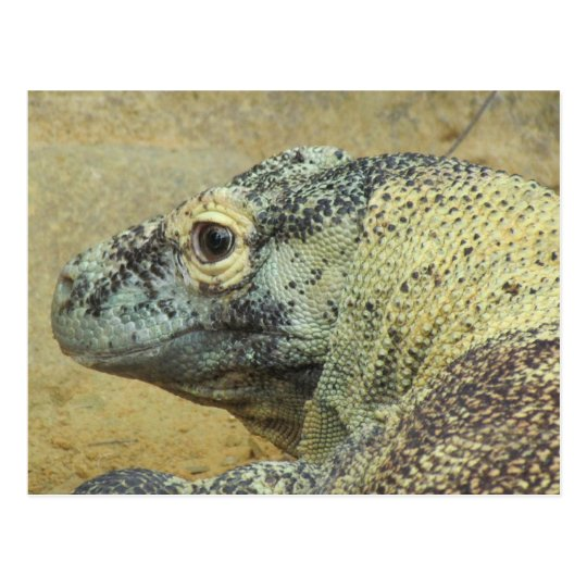 Komodo Dragon Postcard