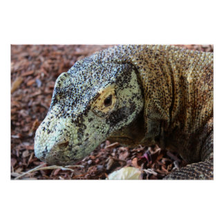 Komodo Dragon Up & Personal Poster