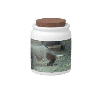 Komodo Dragons Jar Candy Dishes