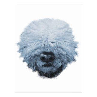Komondor Dog Postcard