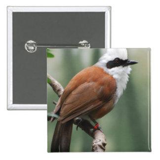 Kookaburra Bird Button