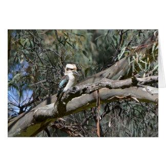 Kookaburra Birthday Card