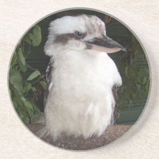 Kookaburra Coaster