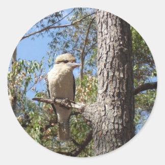 Kookaburra in tree classic round sticker