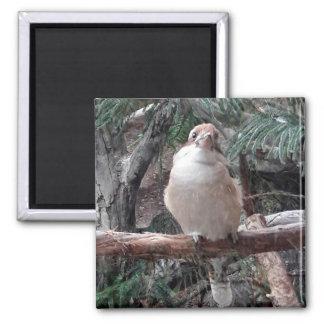 Kookaburra Magnet