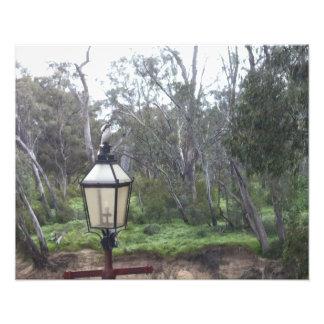 Kookaburra on Lamp Post (Flickr Collection) Print Art Photo